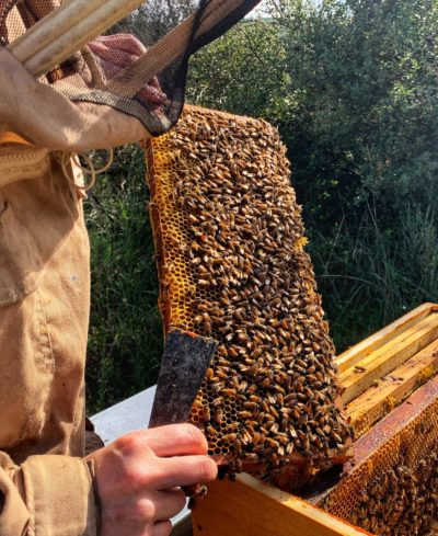 Création de Maison Bee