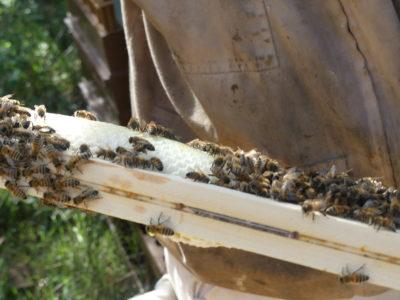 Cadre avec abeilles