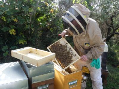 Visite d'une ruche
