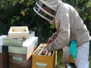 Visitre d'une ruche par l'apicultrice