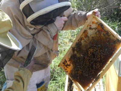 analyse d'un cadre de la ruche