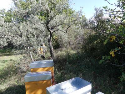 un rucher sous les arbres
