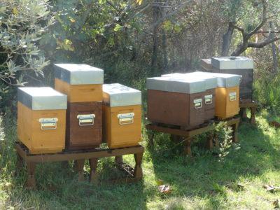 Rucher composé de ruchettes